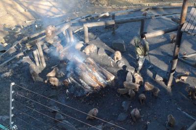 日本モンキーパーク たき火にあたるサルたち
